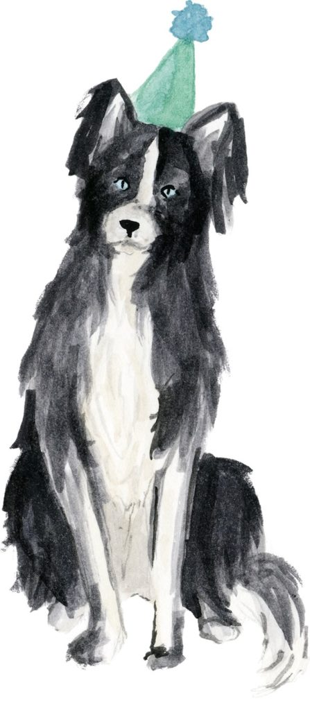 dog in birthday hat